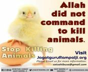 """Tokyo Olympics Do not kill for the taste of tongue Romans 14:21 It is best not to eat meat or drink wine or do anything else that causes problems for other followers of the Lord. """" Saint Rampal Ji """" from indian romans"""
